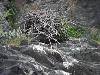 Raven s Nest