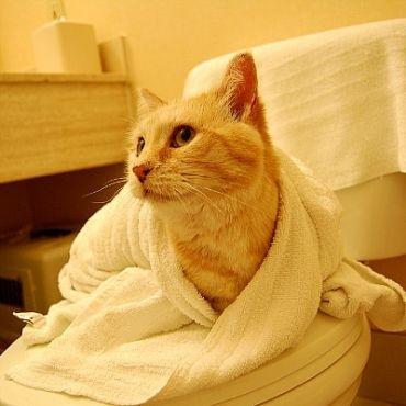 Siputeh Matnor Home For Animal Cara2 Terbaek Selamat Untuk Memandikan Kucing Kesayangan Anda