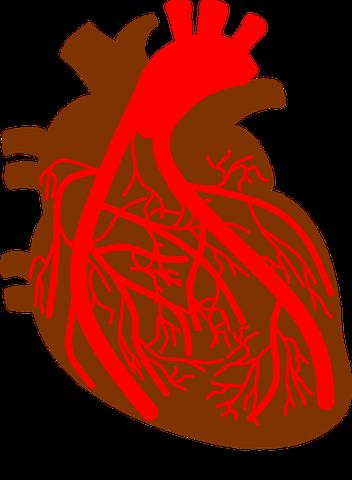 Daftar Harga Organ Tubuh Manusia, Jantung