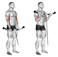 Top 5 exercises for building biceps muscle