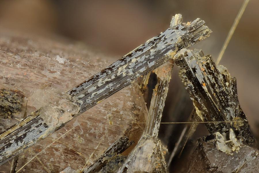 fotos viejas de lebrija santiago de compostela