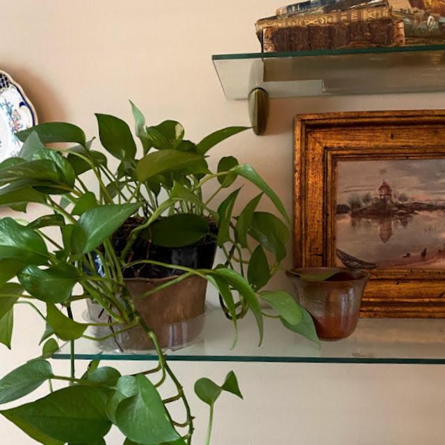 pothos in home decor