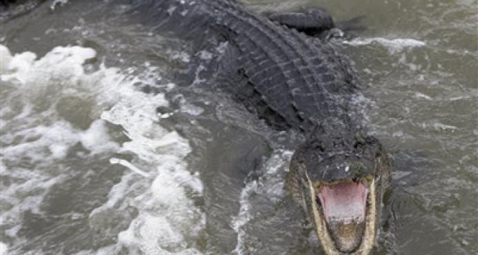 Un cocodrilo ataca a un hombre cuando orinaba en una laguna de Cancún