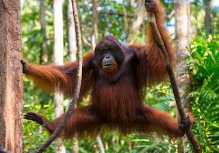 10  Spesies Hewan Paling Langka di Dunia Yang Hampir Punah