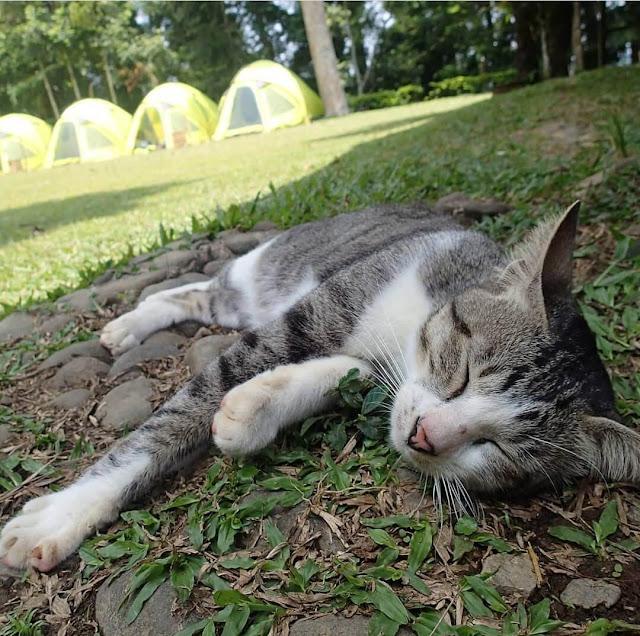 cara merawat kucing peliharaan dengan benar