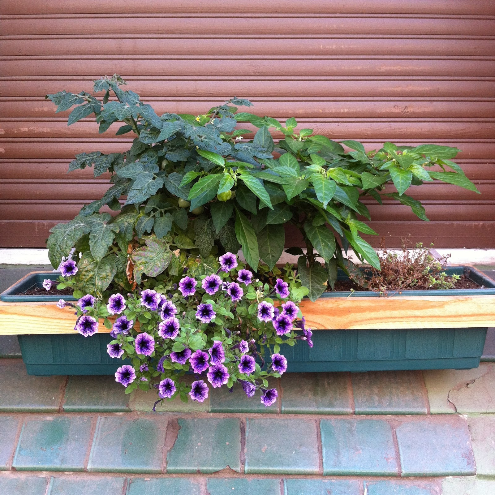 Window Box Garden Leslie Kuo Of Urban Plant Research