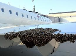 10,000 bees delay a flight in the U.S.