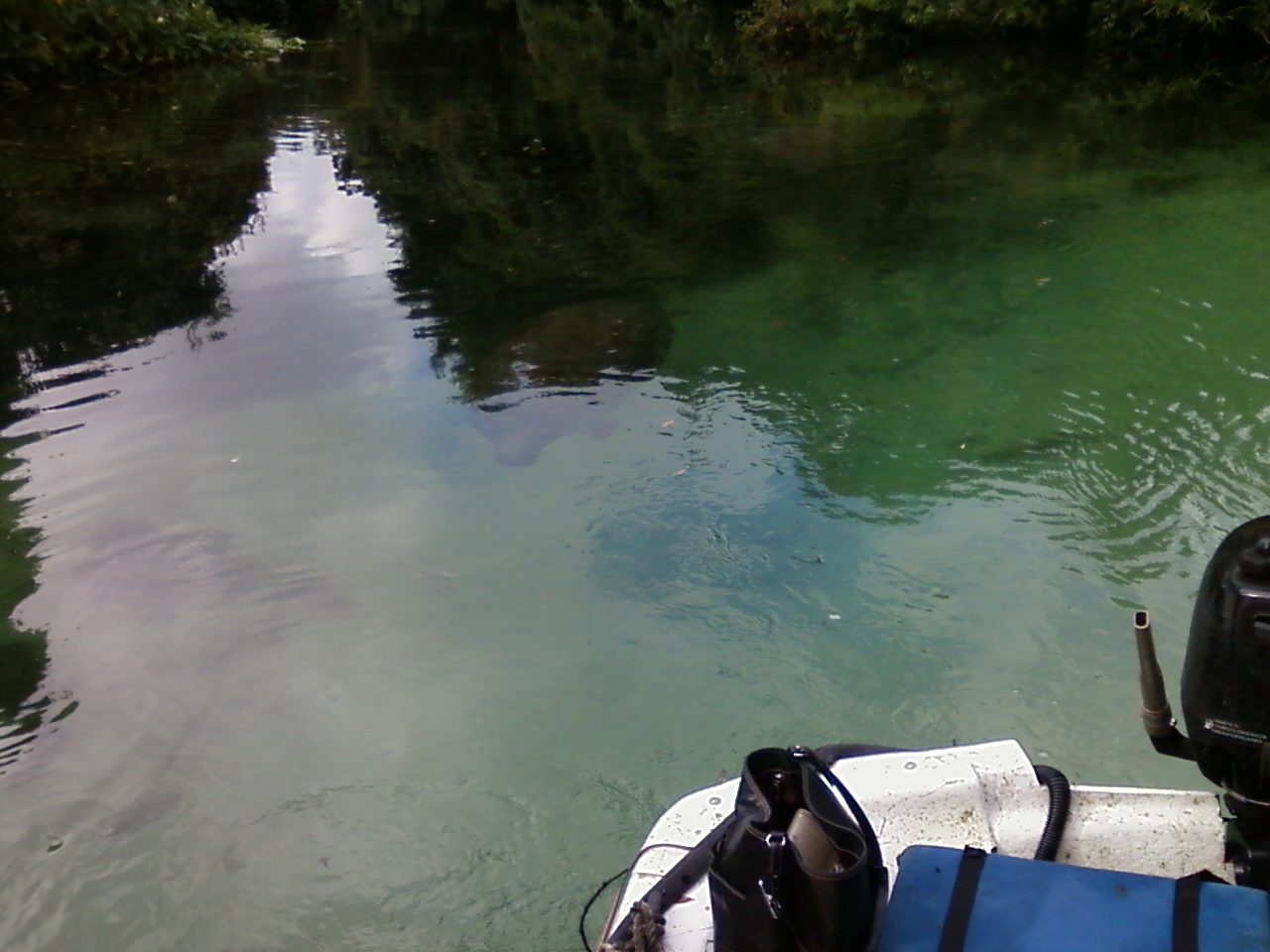 Jon boat following manatee swimming from murky water to clear water