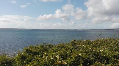 útes s divými ružami s výhľadom na more