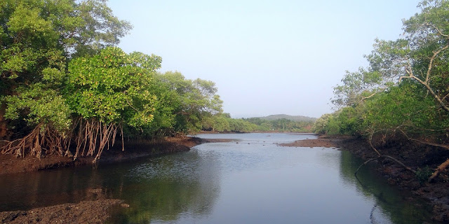 Pengertian, Dan Penyebaran Hutan Mangrove Terbesar Di Indonesia