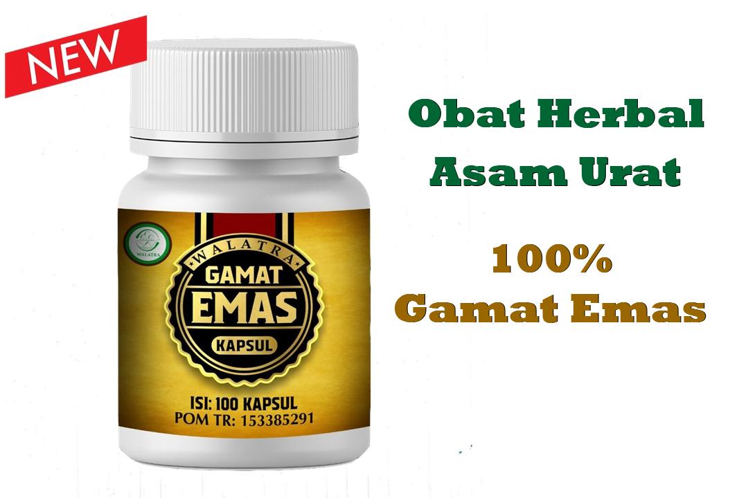 gamat emas kapsul obat herbal asam urat paling manjur