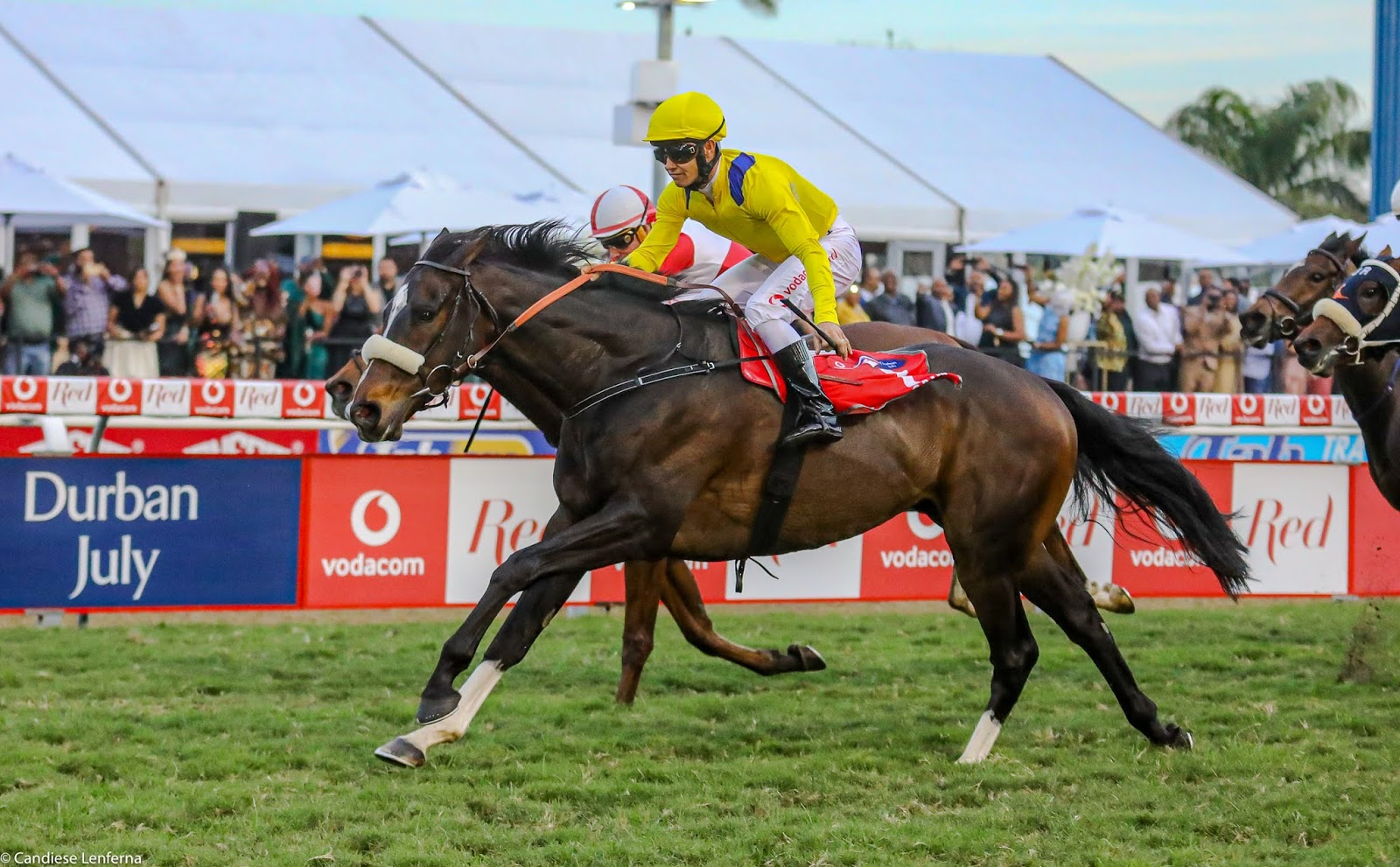 Vodacom Durban July 2020 Horse Profile - Do It Again