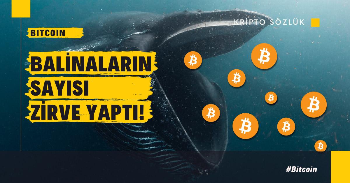 Bitcoin (BTC) Balinaları Zirve Yaptı!