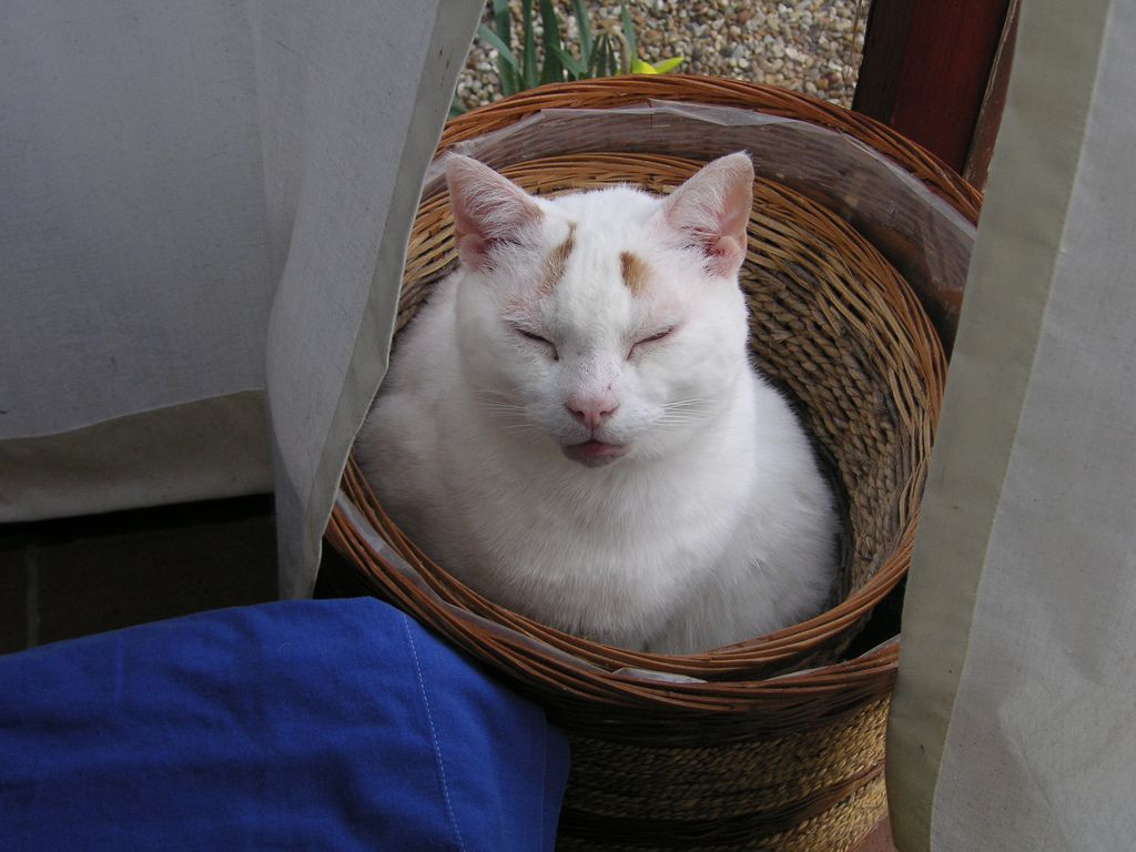 17. Cat in a Basket by Mosquito 52