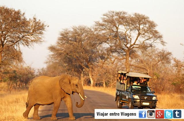 SAFARI NO KRUGER - Tudo o que precisa saber para um Safari no Parque Nacional de Kruger | África do Sul