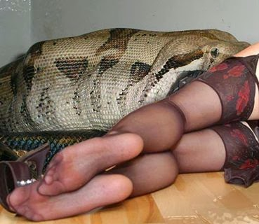 snake having sex with a woman