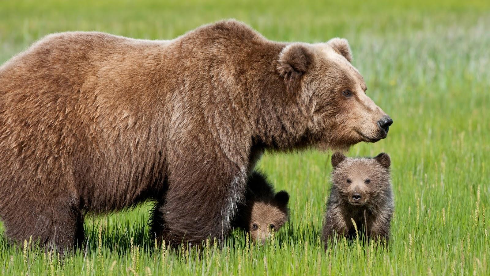Mammifero Detto Poltrone.Io Amo Gli Animali I Love Animals 2015