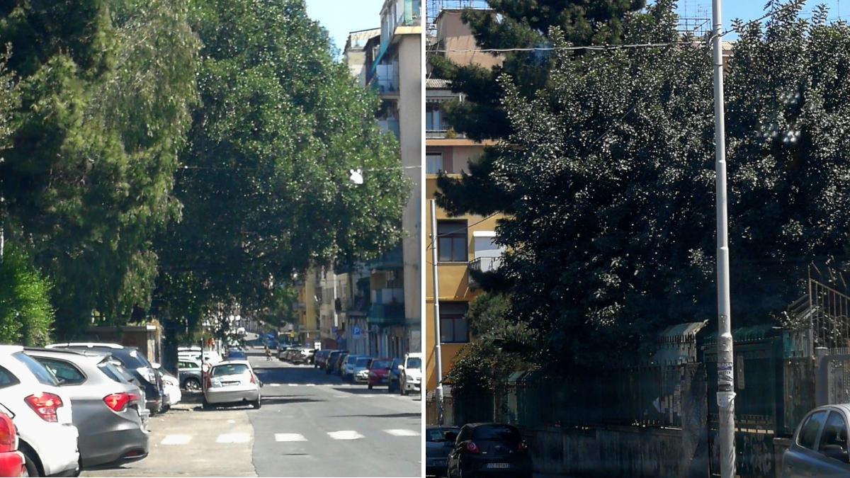 III Municipio potatura alberi