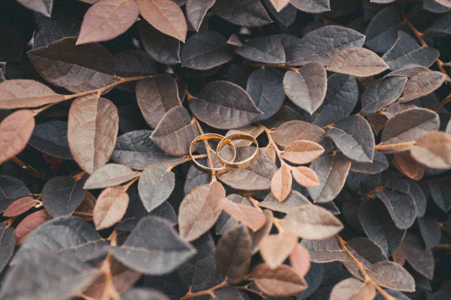 two wedding rings on the autumn leaves