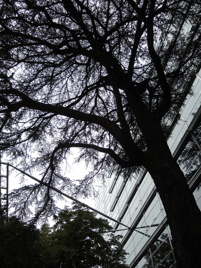 "Parijs: ""Nous les arbres"" in Fondation Cartier pour l'art contemporain"