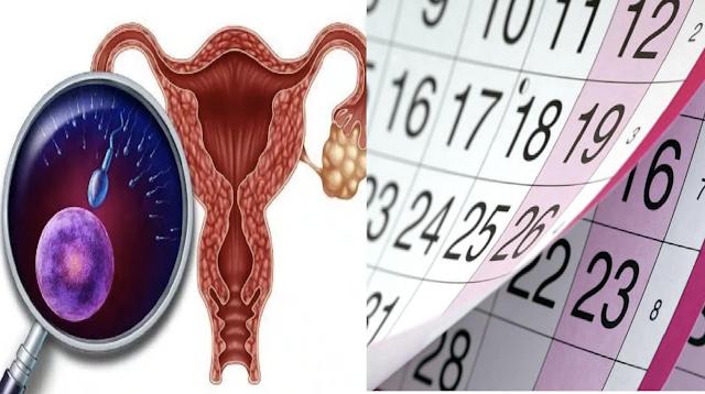 Menstrual Cycle Diagram In Hindi.Alamin Kung Kailan Maaaring Magbuntis At Hindi Maaaring