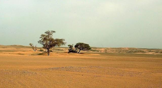 «Όχι τόσο άγονες όσο πιστεύεται η έρημος της Σαχάρας και οι περιοχές Σαχέλ»