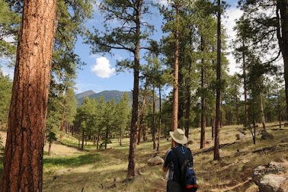 Hiking In Northern Arizona