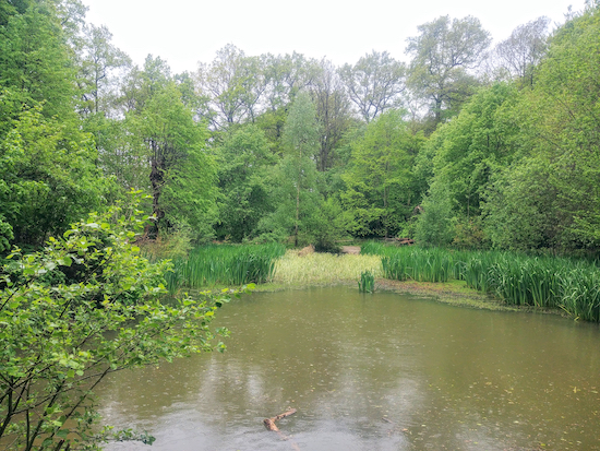 The pond at Chipperfield Common on the return leg