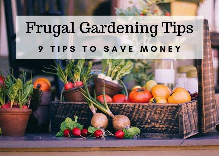 Frugal gardening tips and ideas. This information is for beginners and for seasoned gardeners. This is geared for vegetable gardens, but there are some tips for flower gardens. Save at the greenhouse and with seed starting. Includes some DIY hacks to help you stay on a budget with your garden. These are easy tips that anyone can do. #gardening #garden #frugal #savemoney