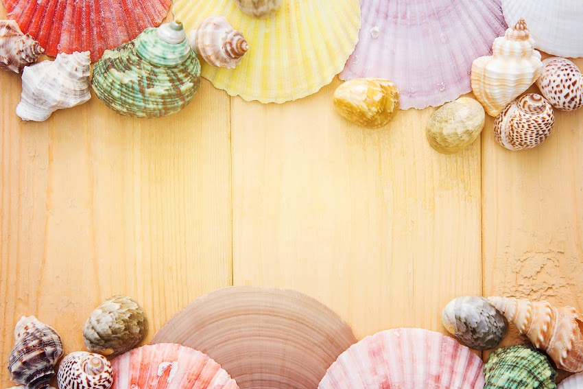 Art Background Board Clam