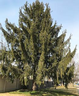 A tree hug