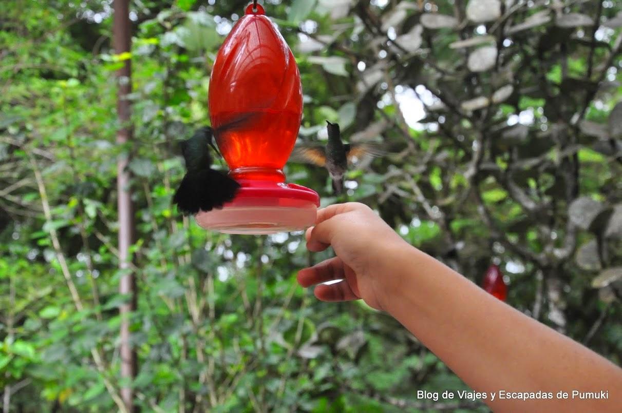 En Monteverde es posible vivir la experiencia de la interacción con colibries