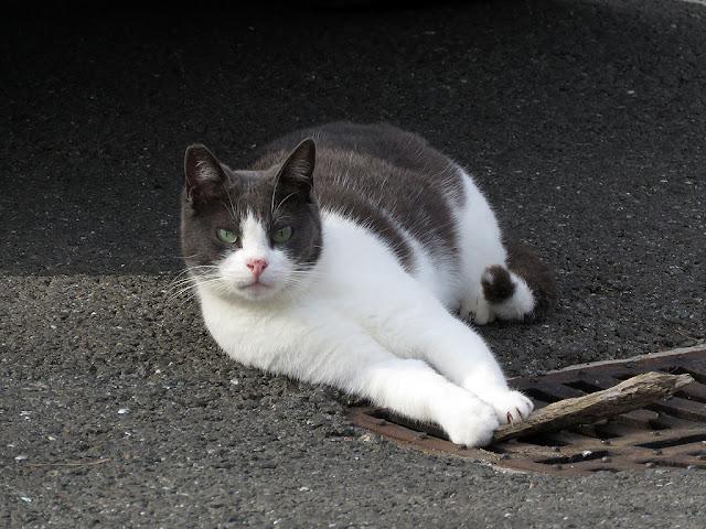 Resting cat, via del Fagiano, Livorno
