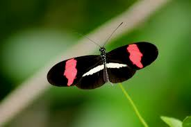 Cerita Kupu-kupu pada Ulat di Dahan