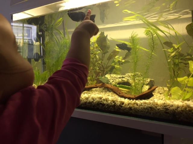 Fische entdecken mit Kinderaugen