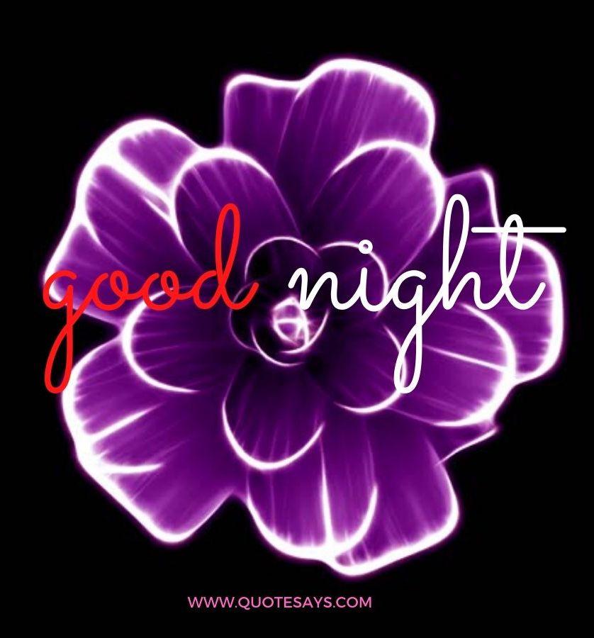 Good Night Violate Flower