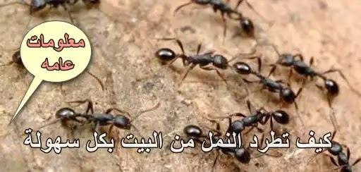 لطرد النمل من المنزل بدون ايذاءه,النمل,الطريقة الفعالة لقتل النمل,الملح يطرد النمل,آيات من القرآن لطرد النمل من البيت,التخلص من النمل,القضاء على النمل,كيفية طرد النمل من المنزل بالقران,طرد النمل,دعاء طرد النمل من البيت,طرد النمل من البيت,طرد النمل من الزرع,رقية طرد النمل,طرد النمل من الاشجار,طرد النمل من النباتات,طرد النمل الصغير,رقية طرد النمل من البيت,طرد النمل بالملح,تخلص من النمل في دقيقة واحدة مع عدم عودته مرة أخرى,دعاء طرد النمل إسلام ويب,تخلص من النمل,7 طرق للقضاء على النمل