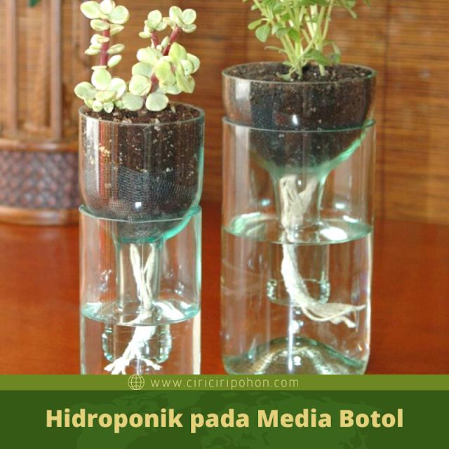 Ciri Ciri Pohon Hidroponik pada Media Botol