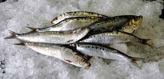 Interesting Nutrition Facts About Fish and Some Recipe Ideas ! Sardines