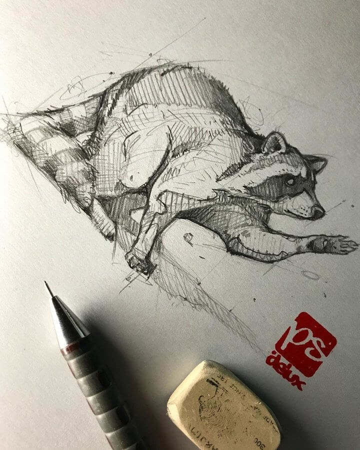 01-Raccoon-Psdelux-Fineliner-Ink-and-Pencil-Animal-Drawings-www-designstack-co