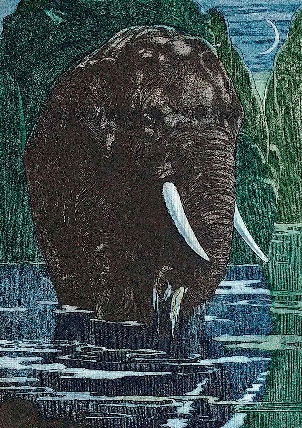 M. De Becque, an elephant in a river at night in color
