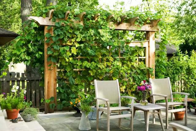 Bahçenizde Mahremiyet Yaratmak İçin Peyzaj Fikirleri