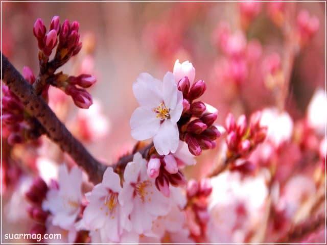 صور خلفيات - خلفيات ورد 3   Wallpapers - Flowers backgrounds 3