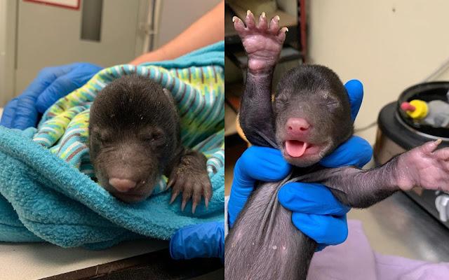 Двух брошенных в коробке малышей сначала приняли за щенков, но это были медвежата