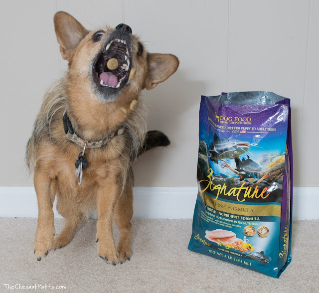 Mini Review: Zignature Dry Dog Food