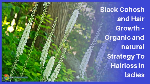 Black Cohosh and Hair Growth – Organic and natural Strategy To Hairloss in ladies