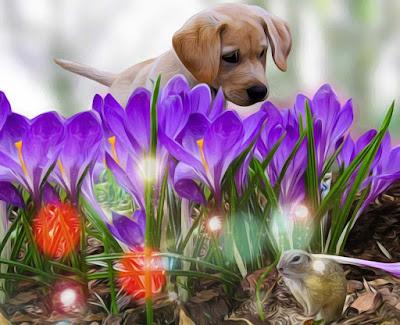 imajenes de perritos, imagenes de perros felices, imagenes de los perros, perros imagenes, fotos perros