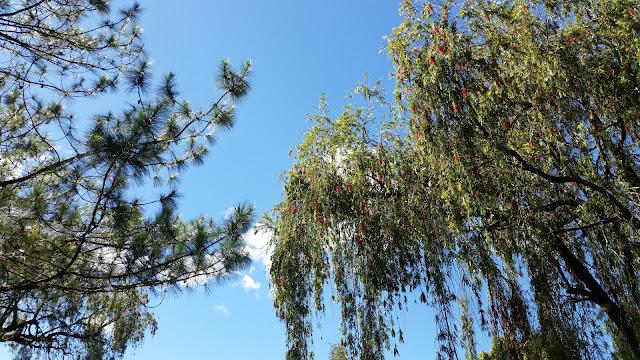 Trees at Burnham Park