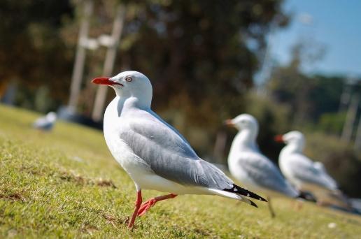 Birds, Mammals