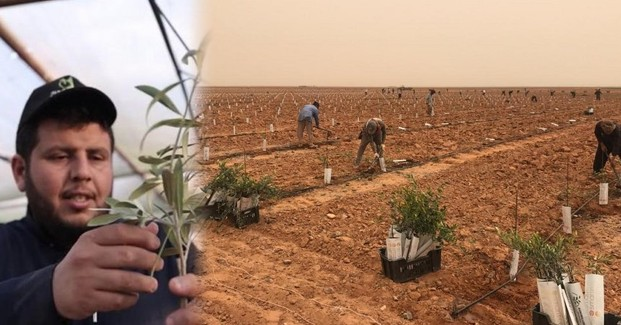 saudi-arabia-10lakhs-olive-trees-project-by-nasir